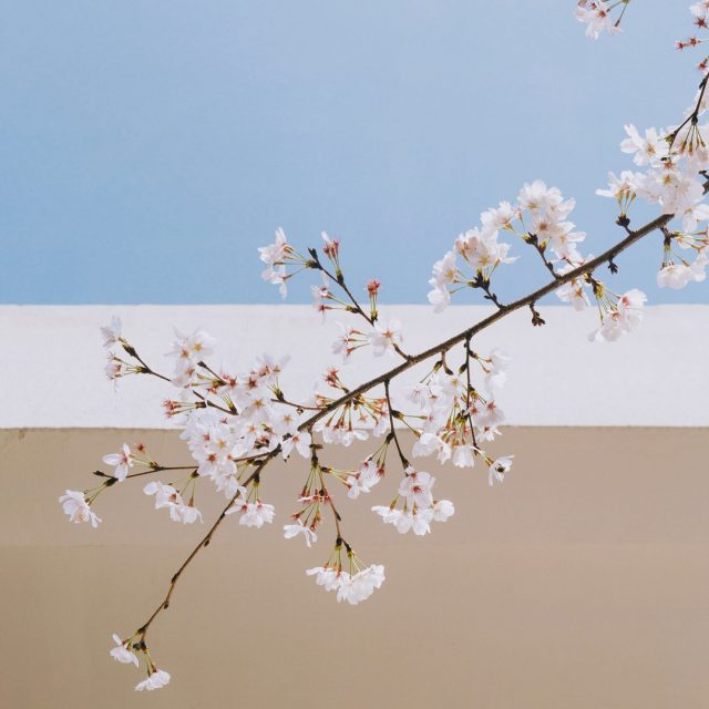A bit early for cherry blossoms! But such a fresh colour palette 🔍😍⁠ .⁠ .⁠ #wearewebdesign #justinecarter #graphicdesign #graphicdesigner #branding #creative #designinspiration #designinspo #creativity #branding #brandidentity #illustrator #photoshop #adobe #creativesuite #behance #design #inspiration #artwork #instainspo #color #colour #colorpalette #colorpalette#colourinspo #palette #art #artist